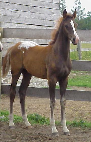 Unamed 2007 Colt at 3 months.